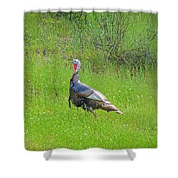 Spring Turkey Gobbler Shower Curtain