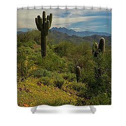 Spring View Of Four Peaks Shower Curtain