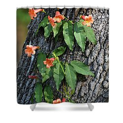 Shower Curtain featuring the photograph Vinery by Skip Willits