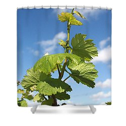 Shower Curtain featuring the photograph Spring Vines by Suzanne Oesterling