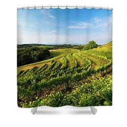 Shower Curtain featuring the photograph Spring Vinyard by Davor Zerjav