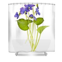 Spring Violets On White Shower Curtain by Elena Elisseeva