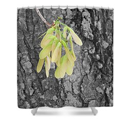 Spring Whirligig Shower Curtain