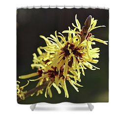 Spring Shower Curtain by Wilhelm Hufnagl