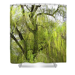 Spring Willow Shower Curtain