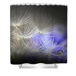 Shower Curtain featuring the photograph Spring Wishes by Kim Henderson