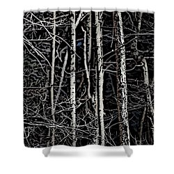 Spring Woods Simulated Woodcut Shower Curtain by David Lane