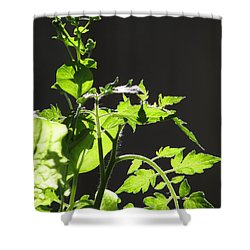 Spring103 Shower Curtain