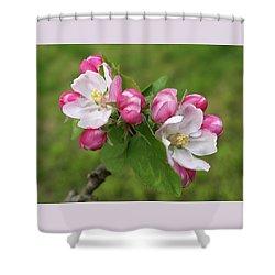 Springtime Apple Blossom Shower Curtain by Gill Billington
