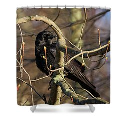 Shower Curtain featuring the photograph Springtime Crow by Bill Wakeley