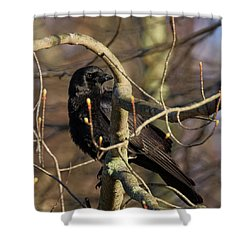 Shower Curtain featuring the photograph Springtime Crow Square by Bill Wakeley