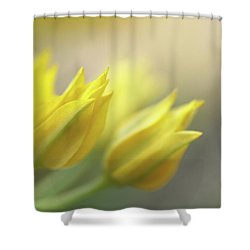 The Dreamtime  Shower Curtain