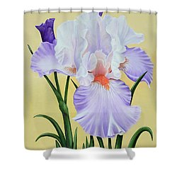 Shower Curtain featuring the painting Springtime Iris by Jimmie Bartlett