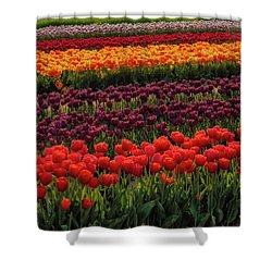 Shower Curtain featuring the photograph Springtime Tulips by Susan Candelario