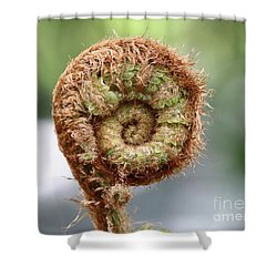 Sprout Of Ferns Shower Curtain by Michal Boubin