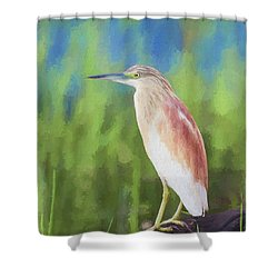 Squacco Heron Ardeola Ralloides Shower Curtain by Liz Leyden
