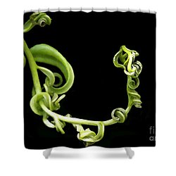 Squiggle Shower Curtain by Sabrina L Ryan