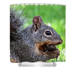 Squirrel 1 Shower Curtain
