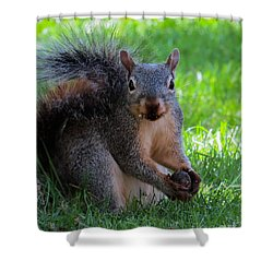 Squirrel 2 Shower Curtain