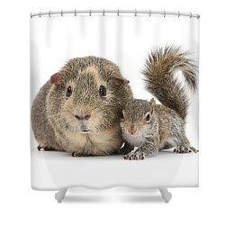 Squirrel And Guinea Shower Curtain