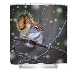 Shower Curtain featuring the photograph Squirrel Balancing Act by Patti Deters