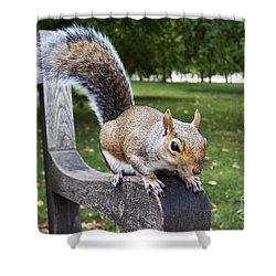 Squirrel Bench Shower Curtain