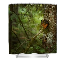 Squirrel Breaks The Silence Shower Curtain by Lisa Knechtel