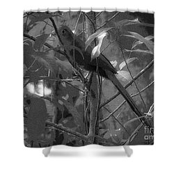 Squirrel Cuckoo  Shower Curtain