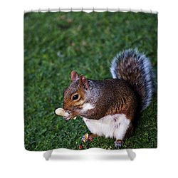 Squirrel Eating Shower Curtain