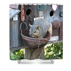 Squirrel Feeding Shower Curtain by Patricia Barmatz