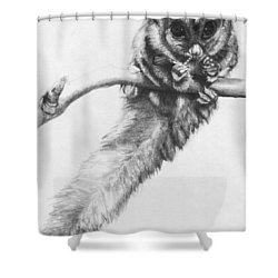 Shower Curtain featuring the drawing Squirrel Glider by Shawna Rowe