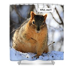 Squirrel Guilty By Association Shower Curtain