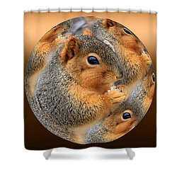 Squirrel In A Ball No.3 Shower Curtain