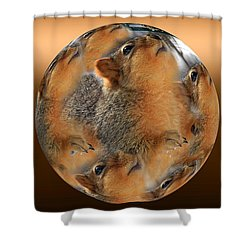 Squirrel In A Ball Shower Curtain