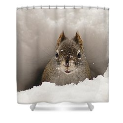 Squirrel In A Snow Tunnel Shower Curtain