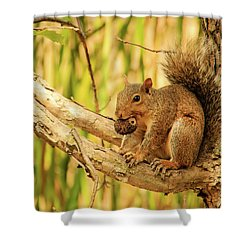 Squirrel In A Tree In The Marsh Shower Curtain