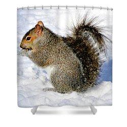 Squirrel In Winter Shower Curtain