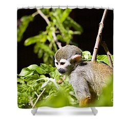 Squirrel Monkey Youngster Shower Curtain