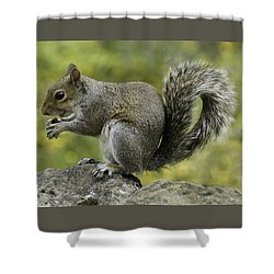 Squirrel, On The Hop Shower Curtain