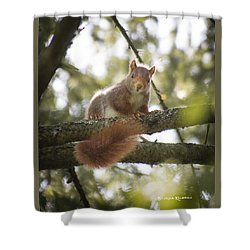 Shower Curtain featuring the photograph Squirrel On The Spot by Stwayne Keubrick