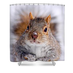 Squirrel Portrait Shower Curtain by Mircea Costina Photography