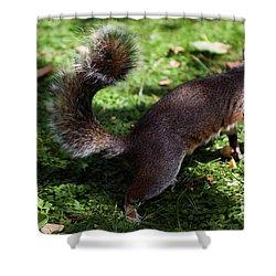 Squirrel Running Shower Curtain