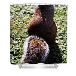Squirrel S Back Shower Curtain