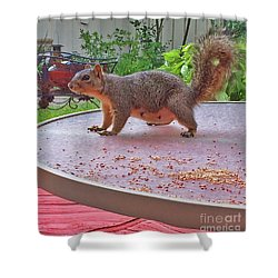 Squirrel Visits Me Shower Curtain