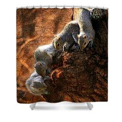 Squirrels - A Family Affair X Shower Curtain by Aurelio Zucco