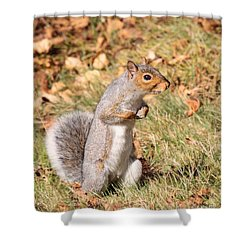 Squirrely Me Shower Curtain