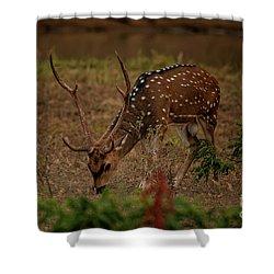 Sri Lankan Axis Deer Shower Curtain