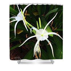 St. A S Spider Flower Couple Shower Curtain by Daniel Hebard
