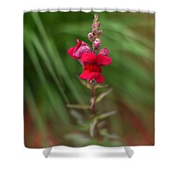 St. Johns Park Flower 872 Shower Curtain