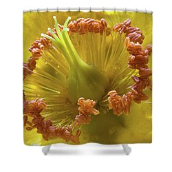 St Johns Wort Flower Centre Shower Curtain